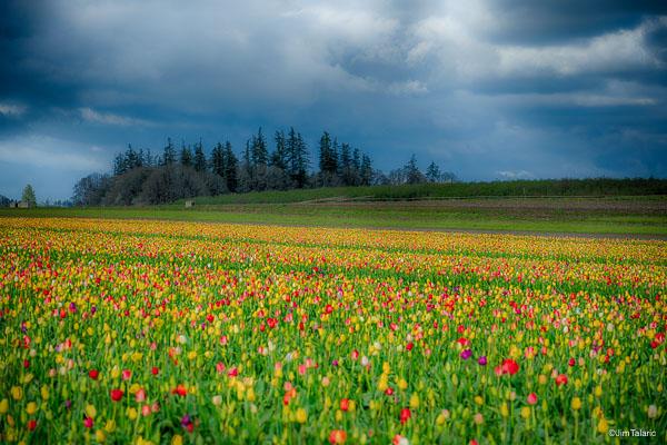 180408-Oregon-020_HDR.jpg